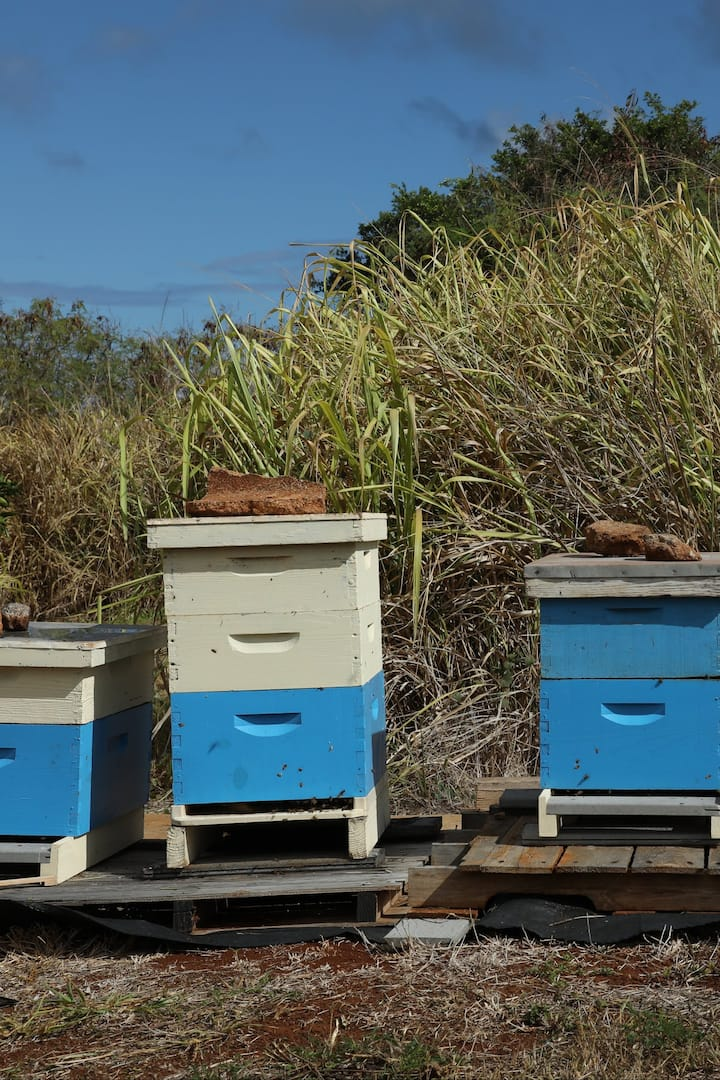 Bee apartments