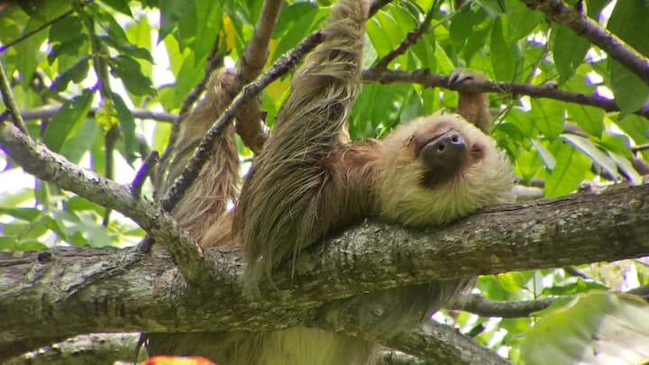 Sloths can be seen in this tour.