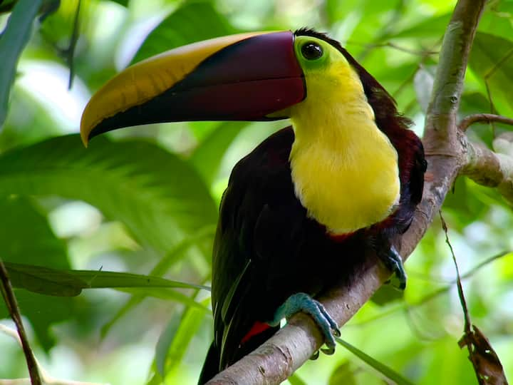Toucan and other birds could be spot