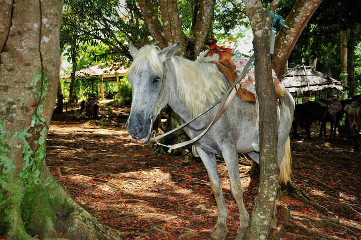 Travel on horseback towards the El Limon