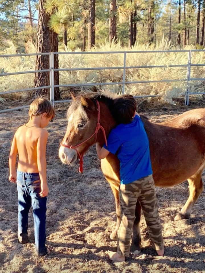 Buddy the pony