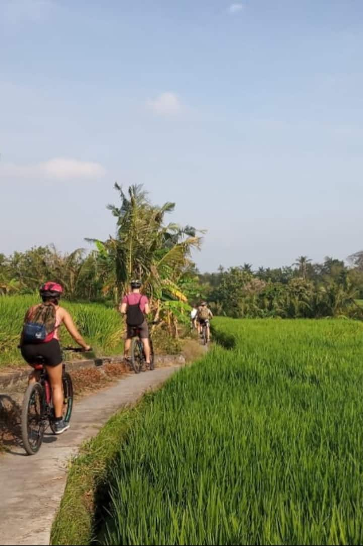 Riding Through the Ricefields