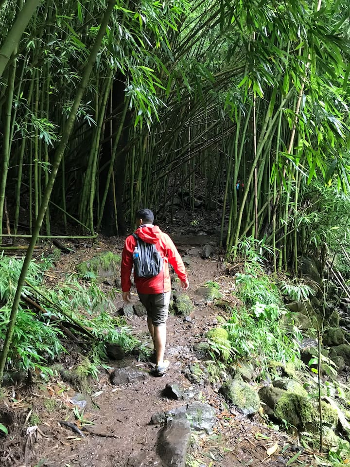 Explore bamboo forests