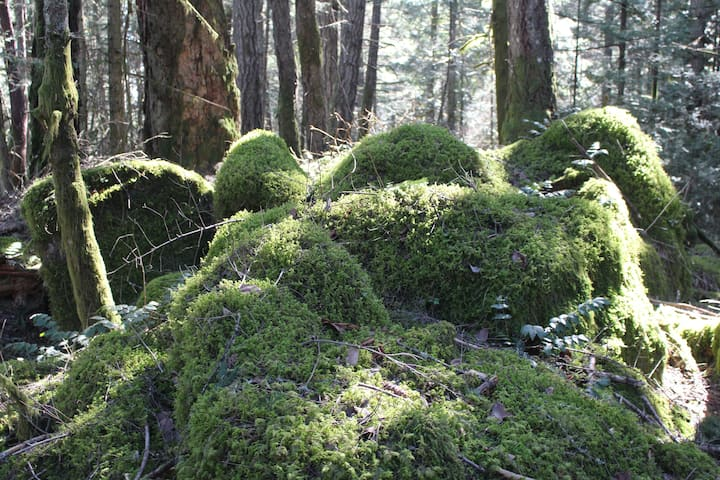 Carpets of moss and ferns