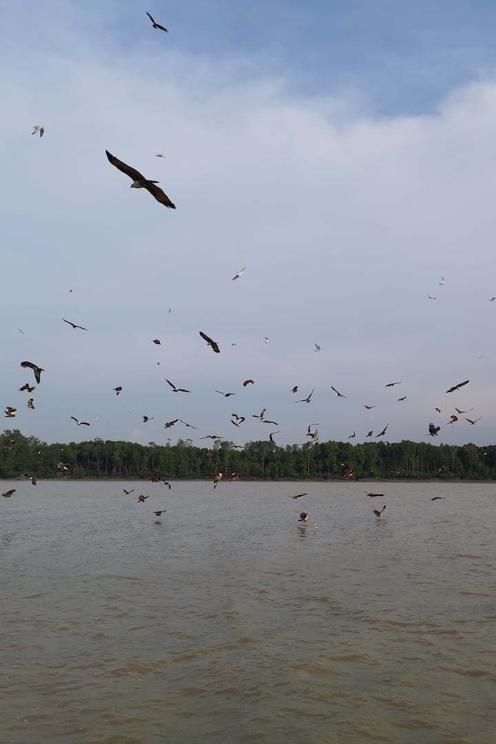 Eagle flying around looking for fish