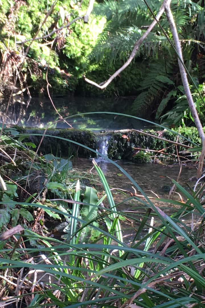 Forest water feature