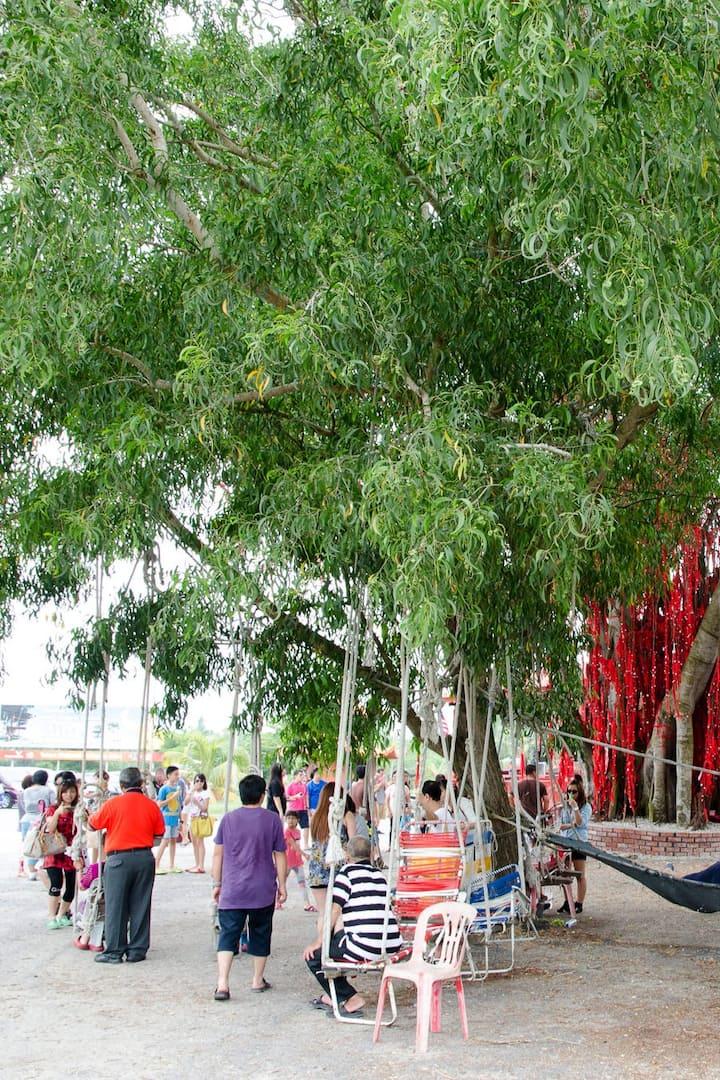 Wishing tree by seaside