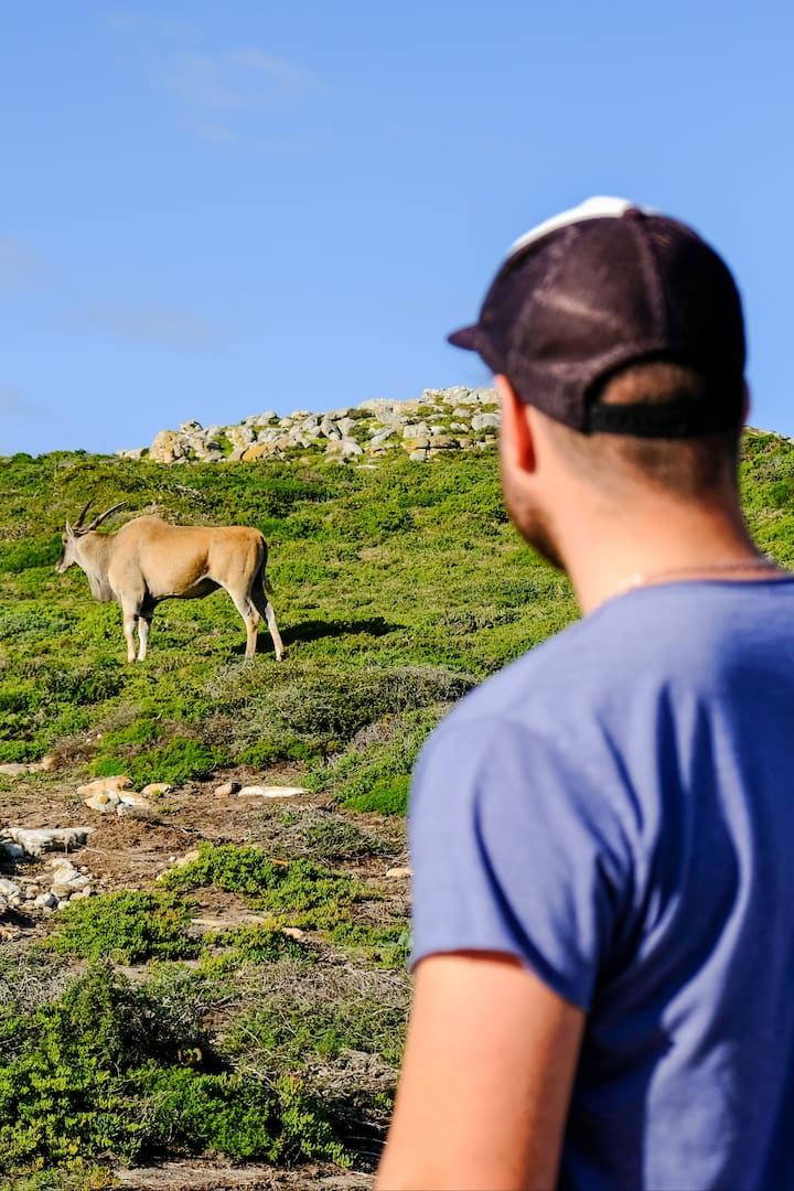 Observing majestic Eland from the trail.