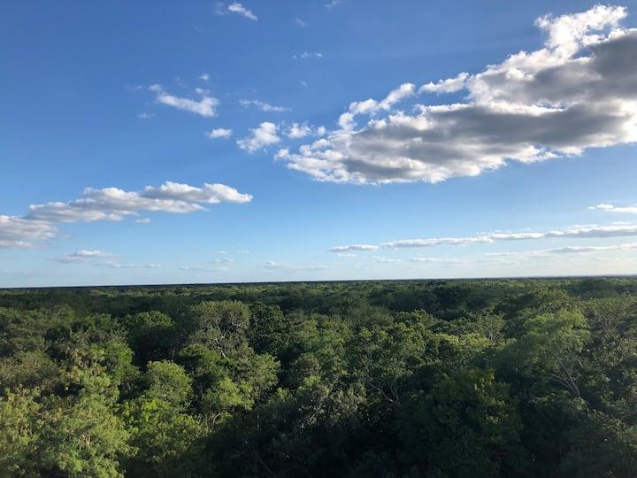 La selva yucateca desde las alturas