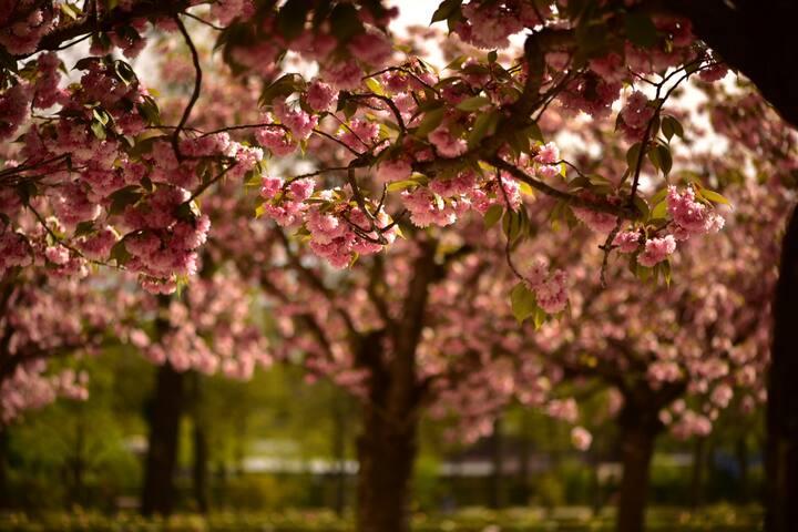 Im April blühen die Bäume
