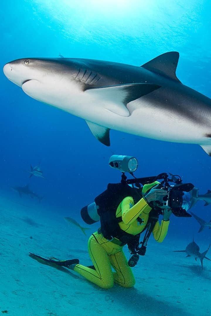 Photographing sharks in Bahamas.