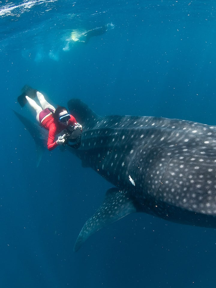 Photographing Whale Sharks in Mexico.