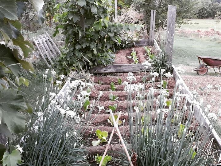 Our organic vegetable garden!