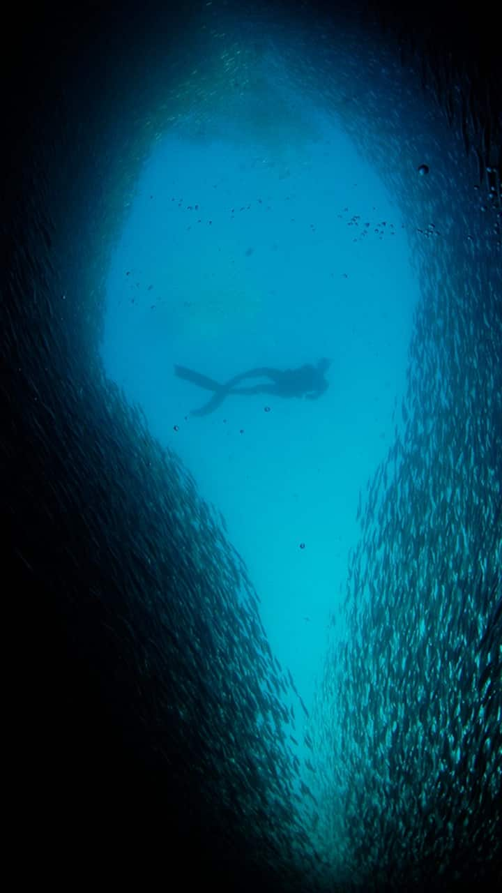 Swim through shoals of Sardines