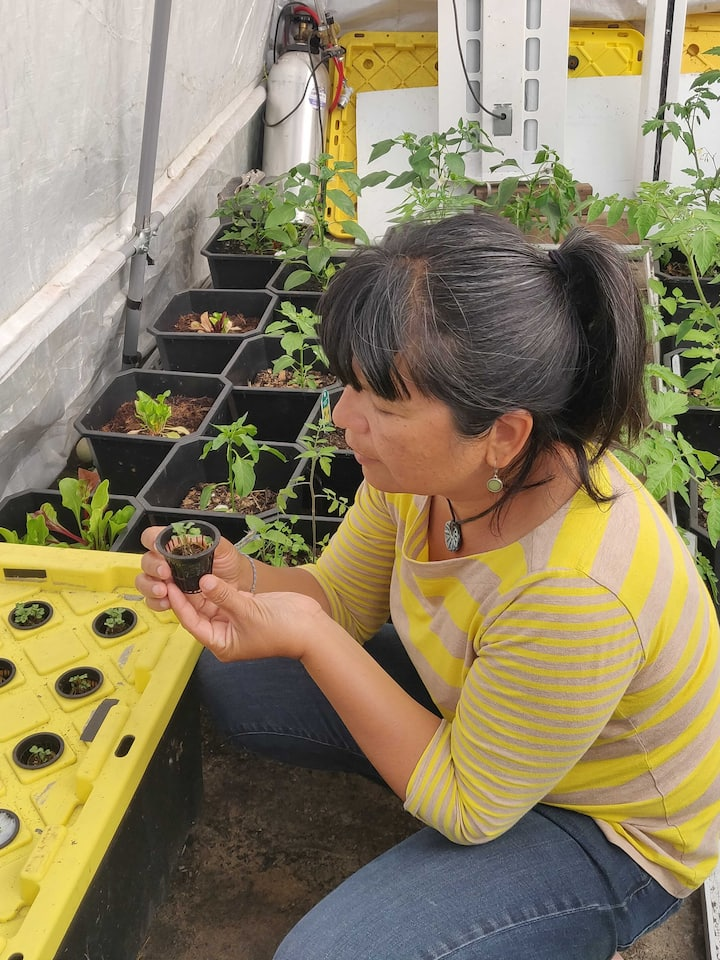 Learn easy ways to grow herbs at home