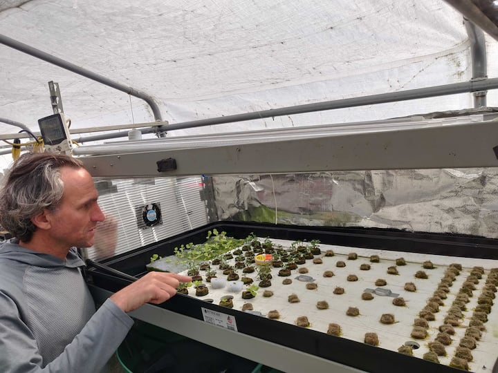 Learn about hydroponics