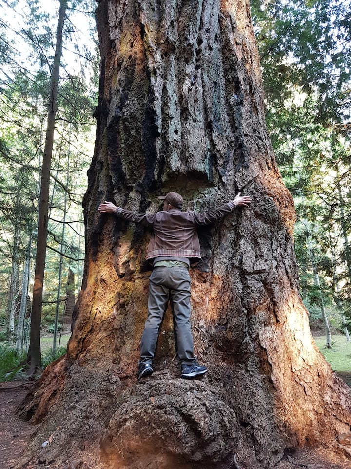 Connecting with a Douglas-fir