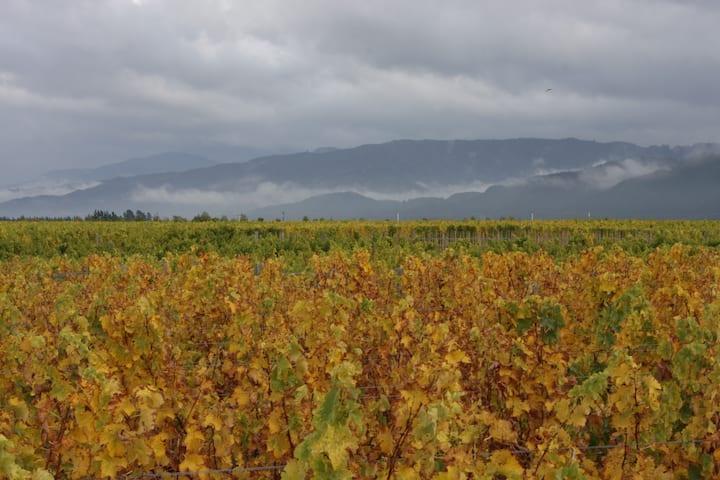 Marlborough Vineyards in the autumn