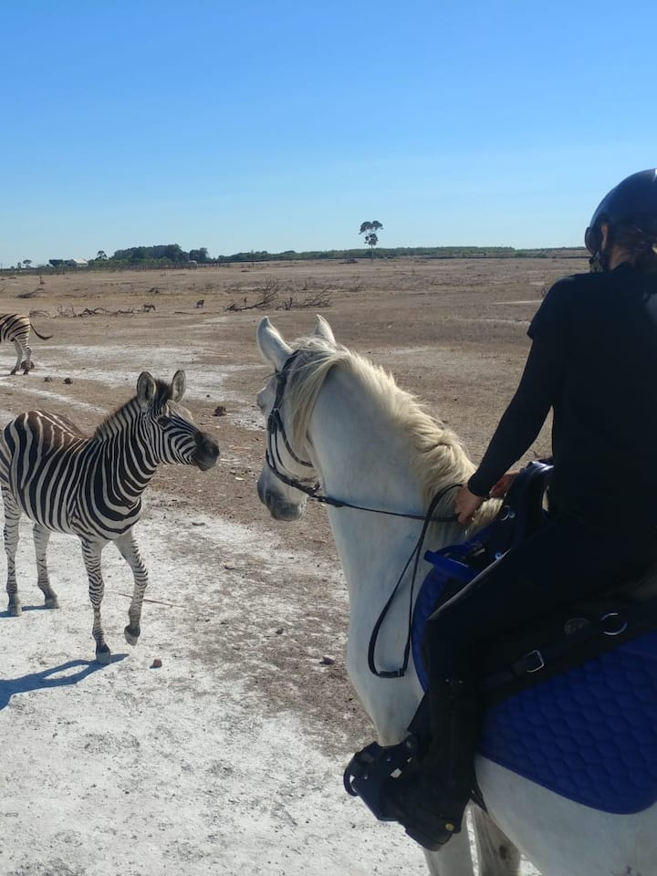 Ice meeting a young zebra