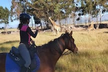 Live Virtual Wildlife Safari in Africa