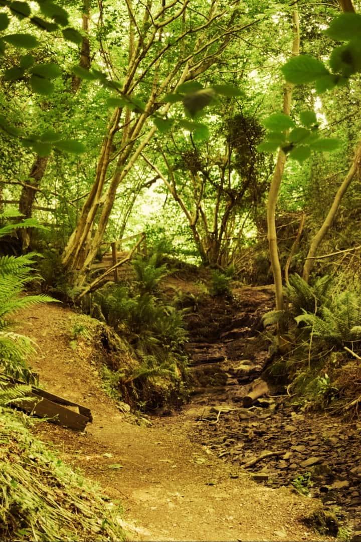 Cregagh Glen Trail