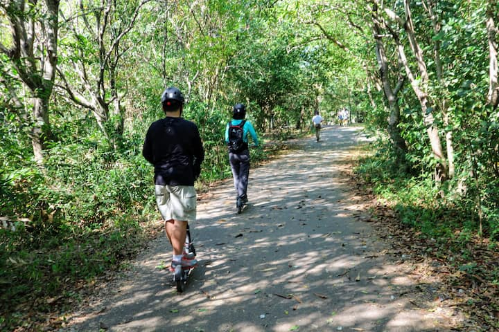 Scoot by mangrove forests