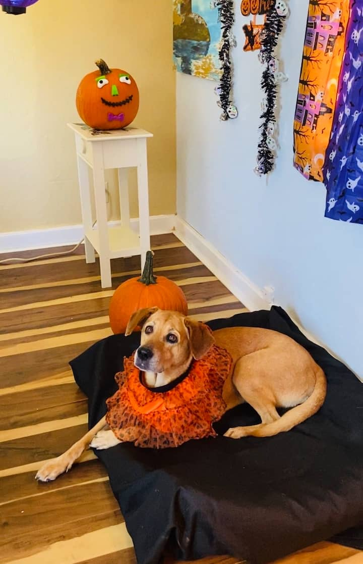 Ready for Halloween!
