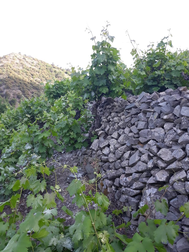 Some vines in the area