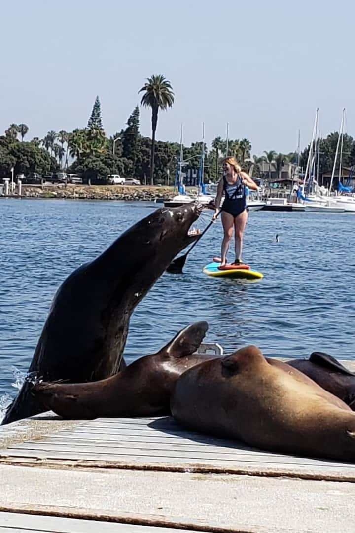Paddle with Sealions!