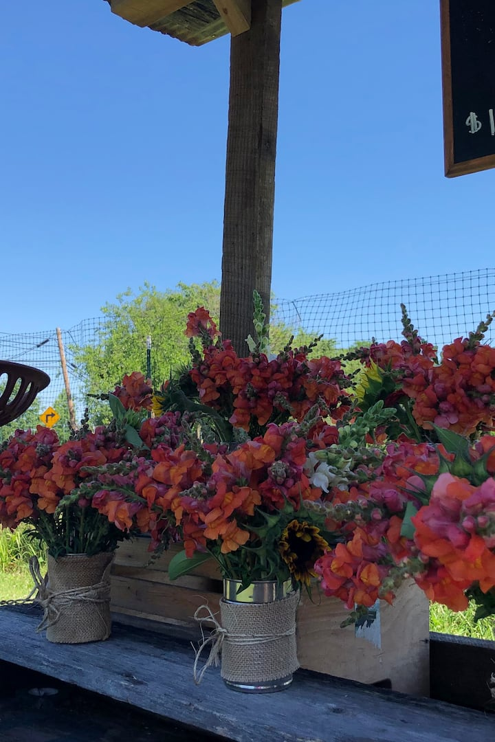 Visit the summer time flower farm.