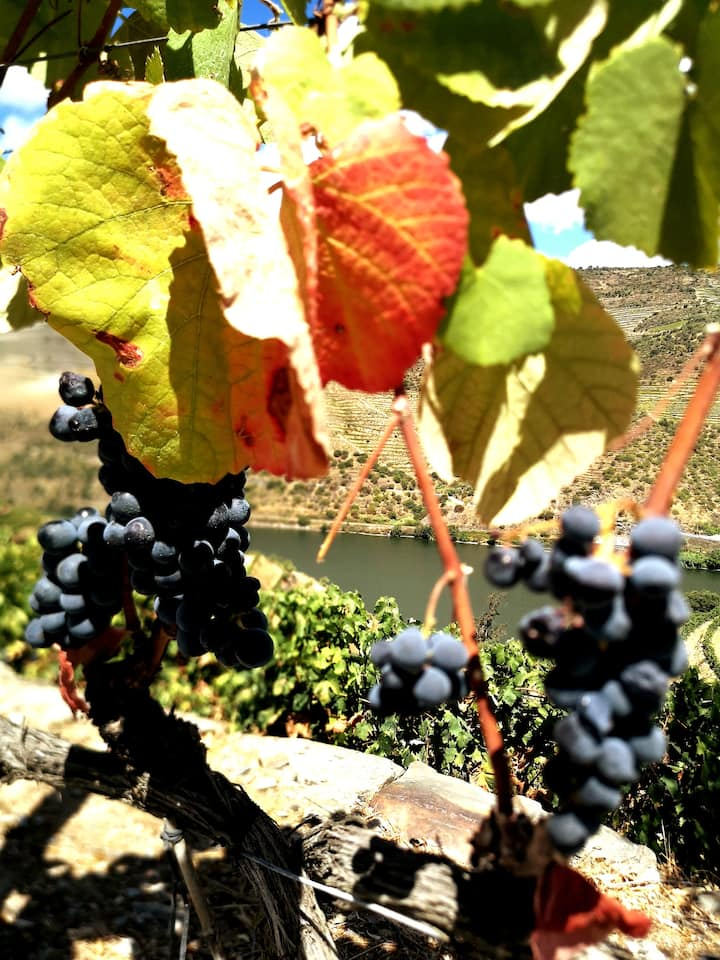 The colors of the vines changing ...