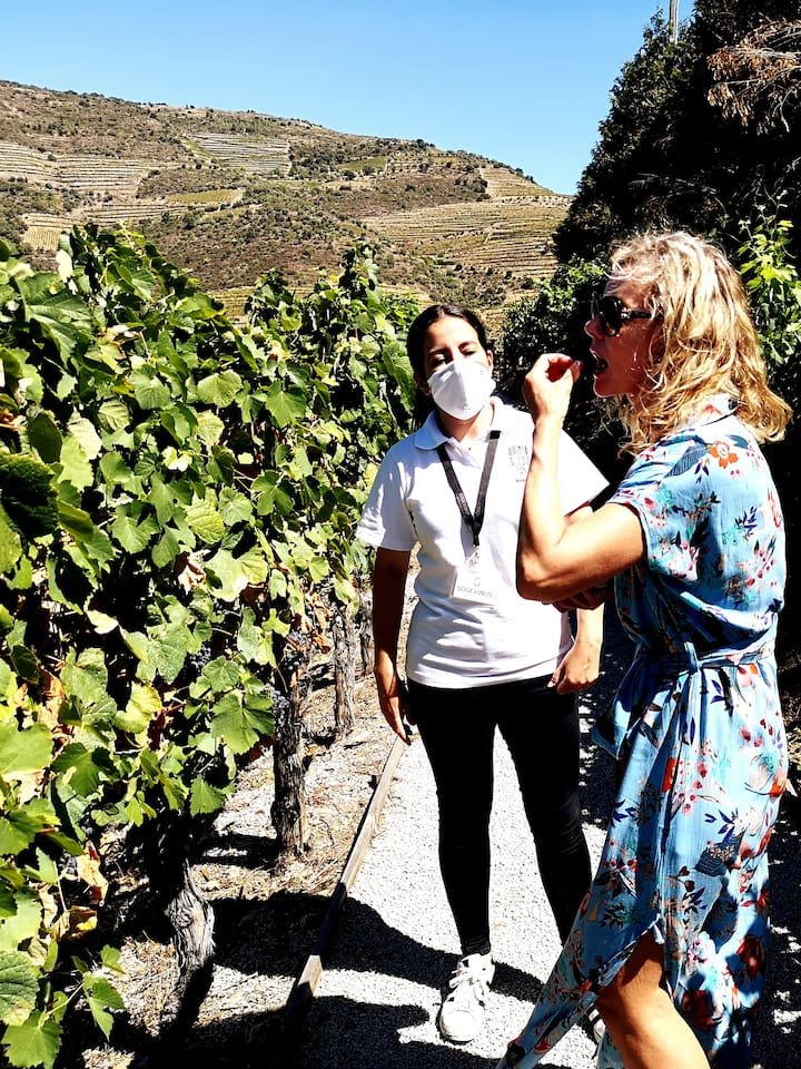 Taste different grapes in the vineyards.