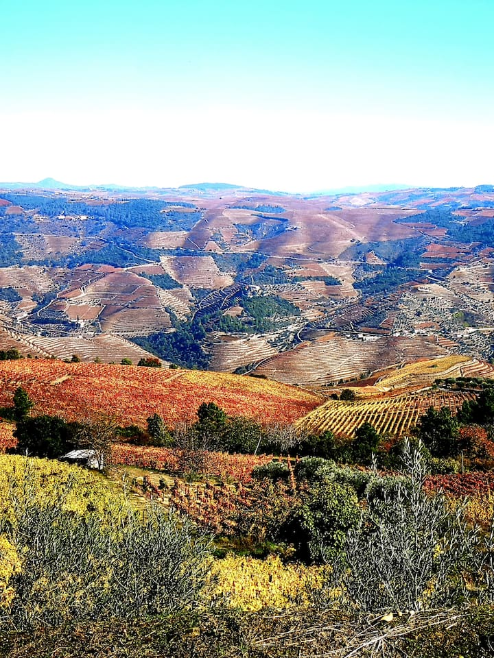 Visit highest hills in Douro 600mts.