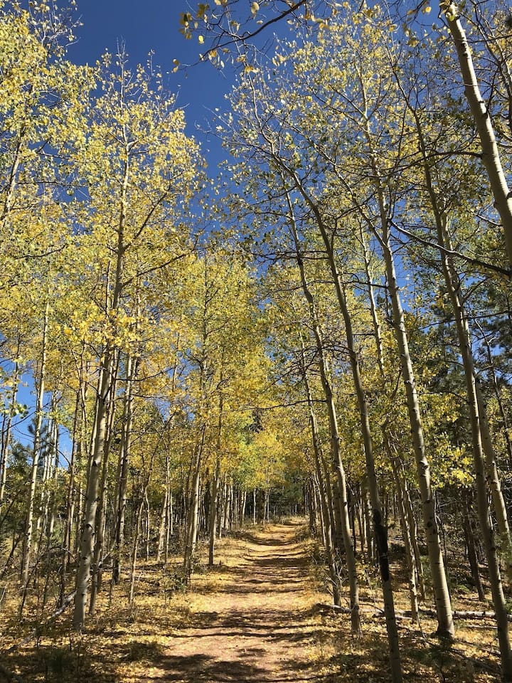 Come experience the fall colors!