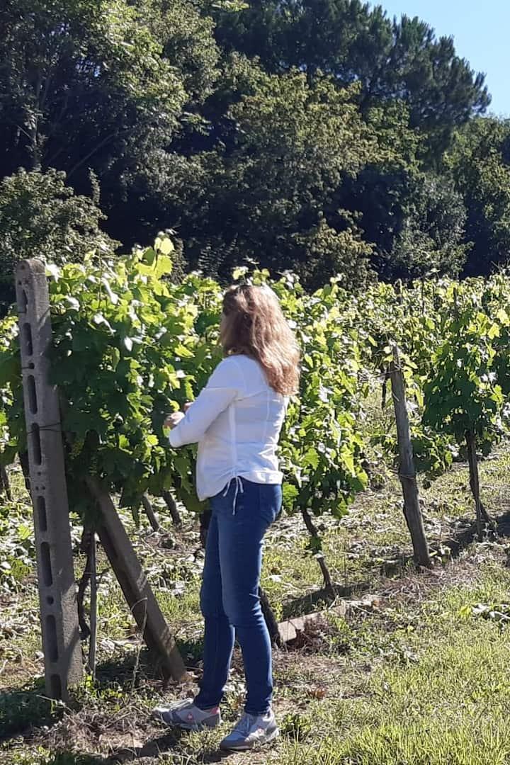 Rosanna's vineyard