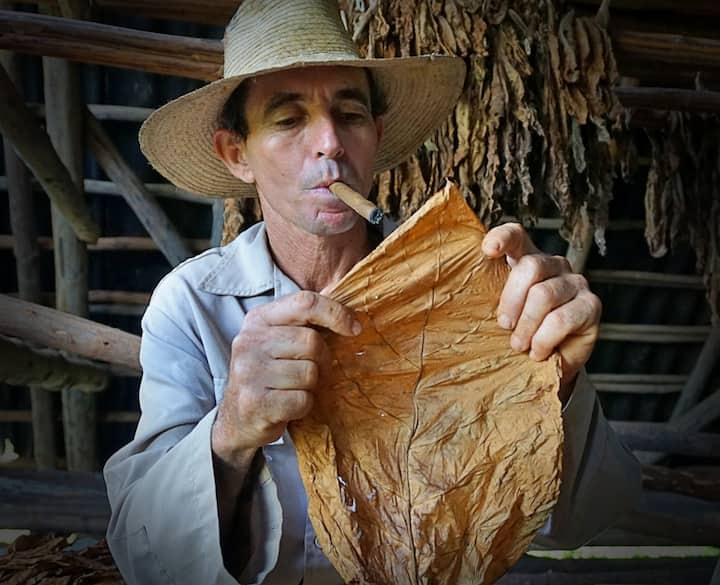 Learn  about organic tobacco. Enjoy one!