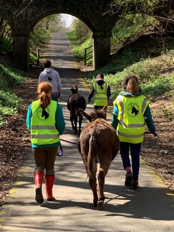 Donkey walking.
