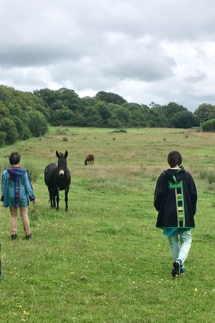 À la rencontre du troupeau
