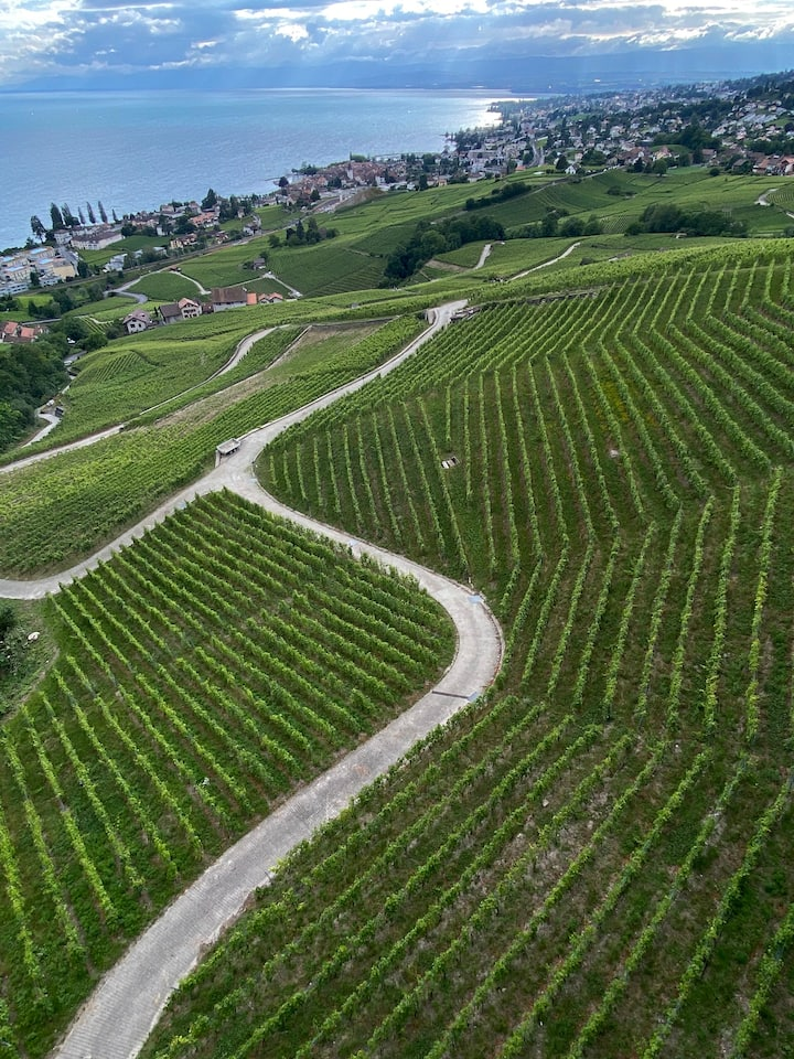 High above the vines of Lavaux