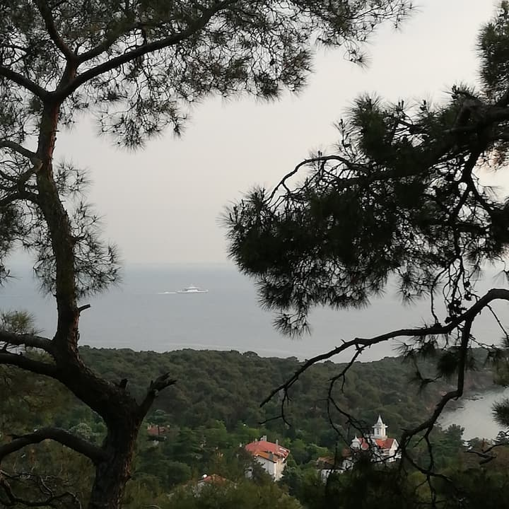 View from the forest