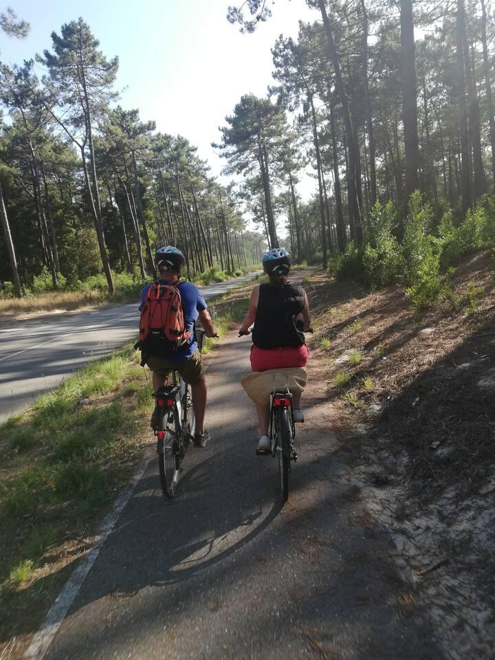 <Estrada Florestal