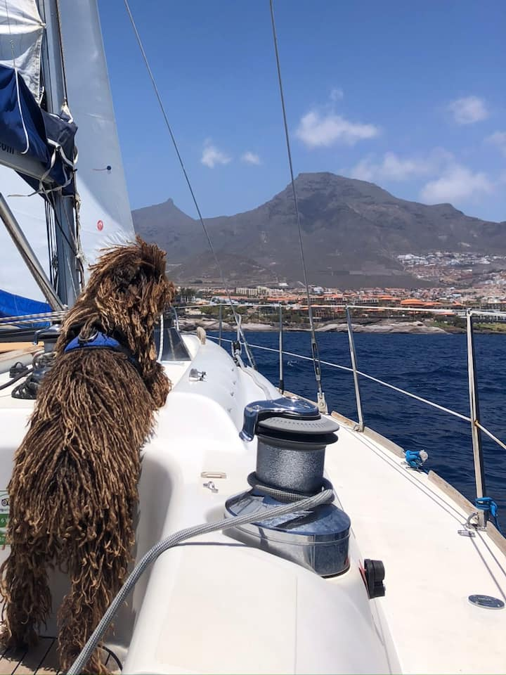 Blue the dog enjoying the sailing