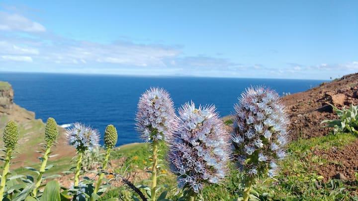 Pride of Madeira - plant name