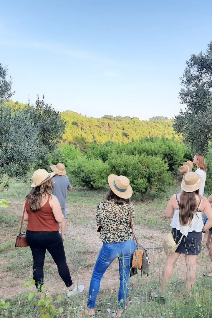 La visita i explicació a les vinyes