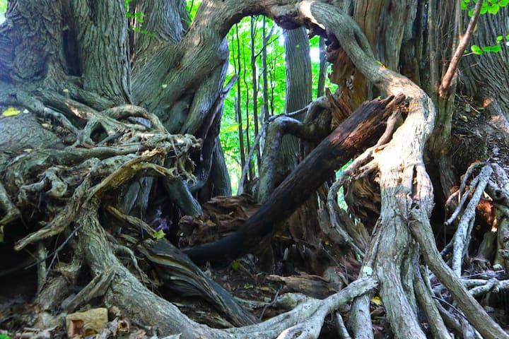 原始林の風景