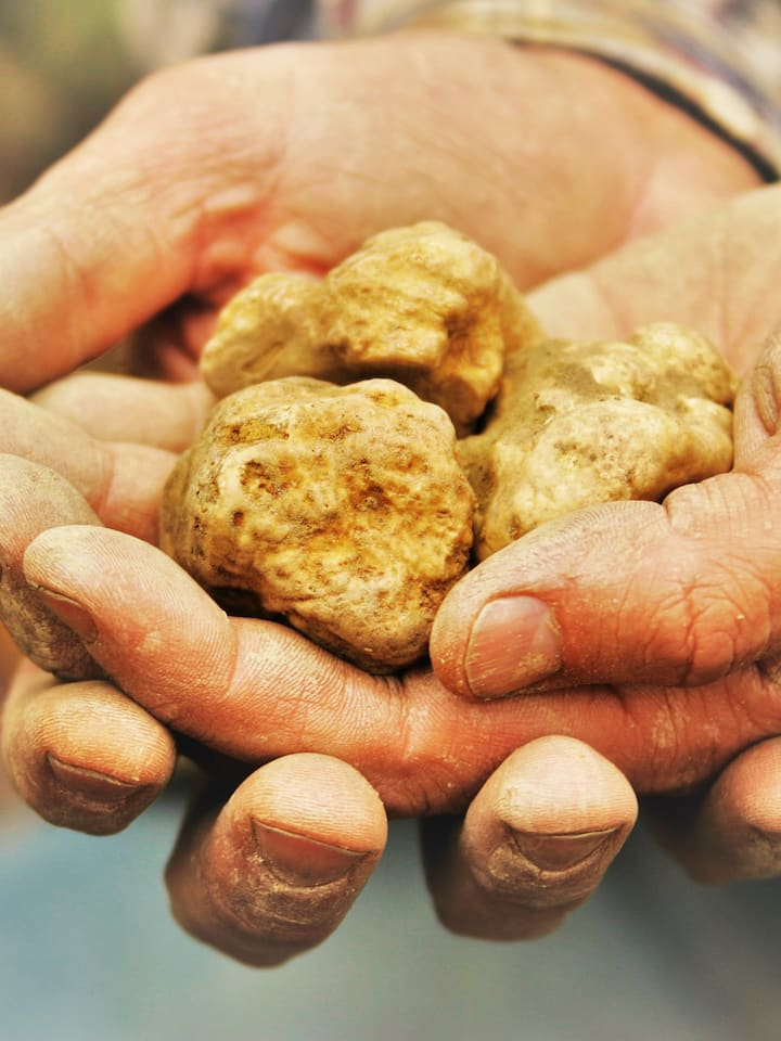 White Truffle of Alba