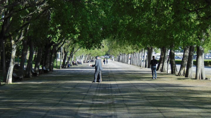 The right alley of the Eduardo VII Park.