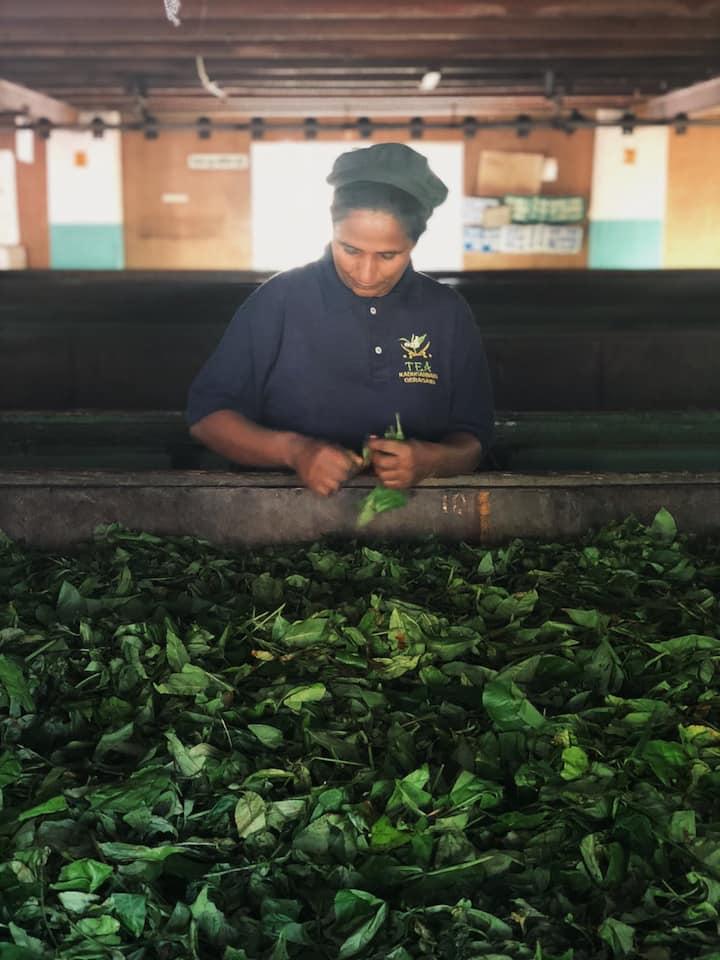 Geragama Tea Factory