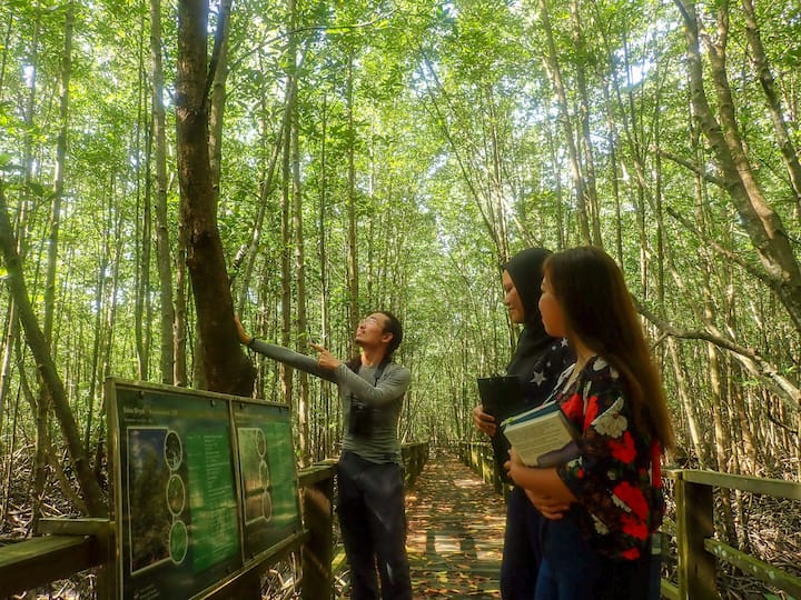 Discover more about mangrove trees