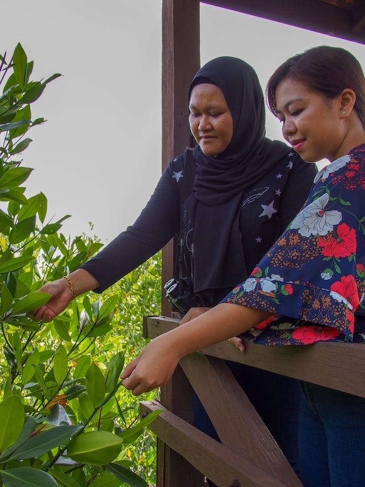 Learn more about the biology of mangrove
